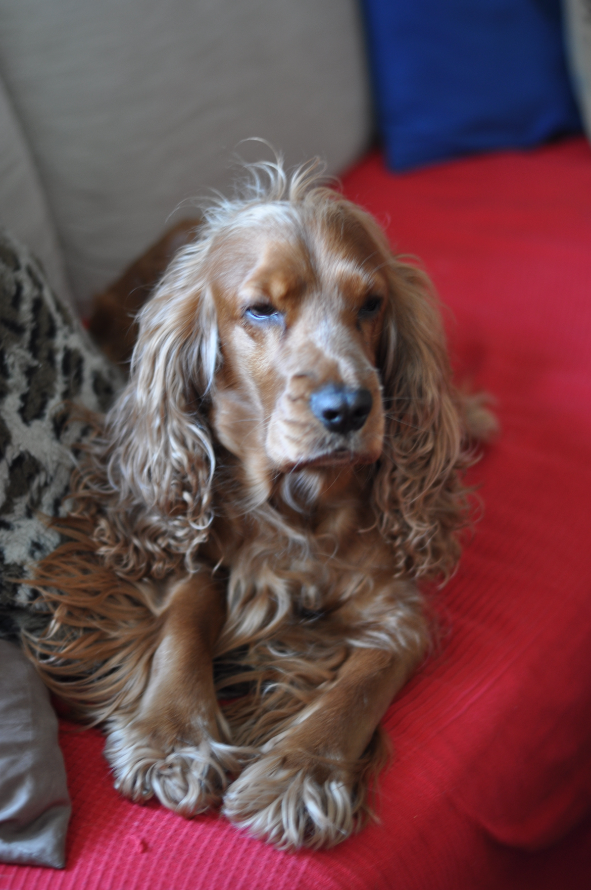 Naomella_How-many-lives-does-a-dog-have-blogpost